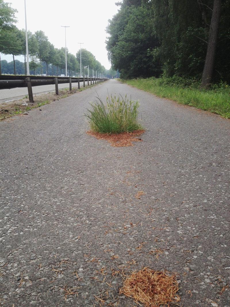 foto's Wijnegem, België